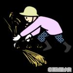 稲刈りのイラスト