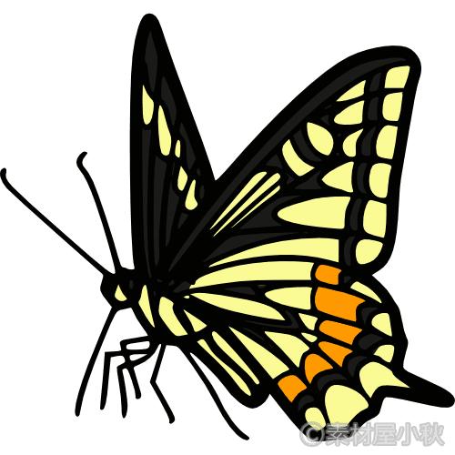 アゲハ蝶のイラスト 素材屋小秋