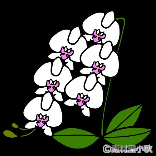 胡蝶蘭のイラスト 素材屋小秋